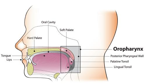 oropharynx cancer and hpv