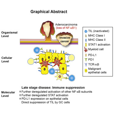 gastric cancer of causes