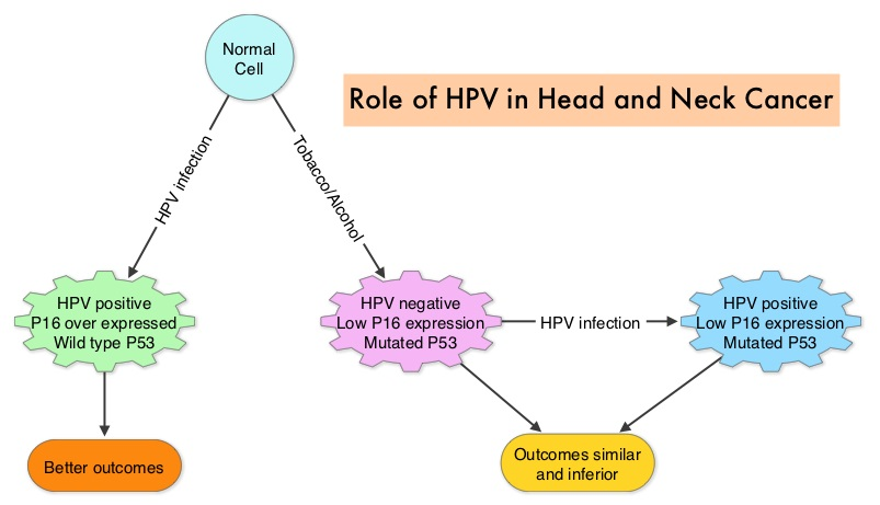 p16 and hpv in head and neck cancer