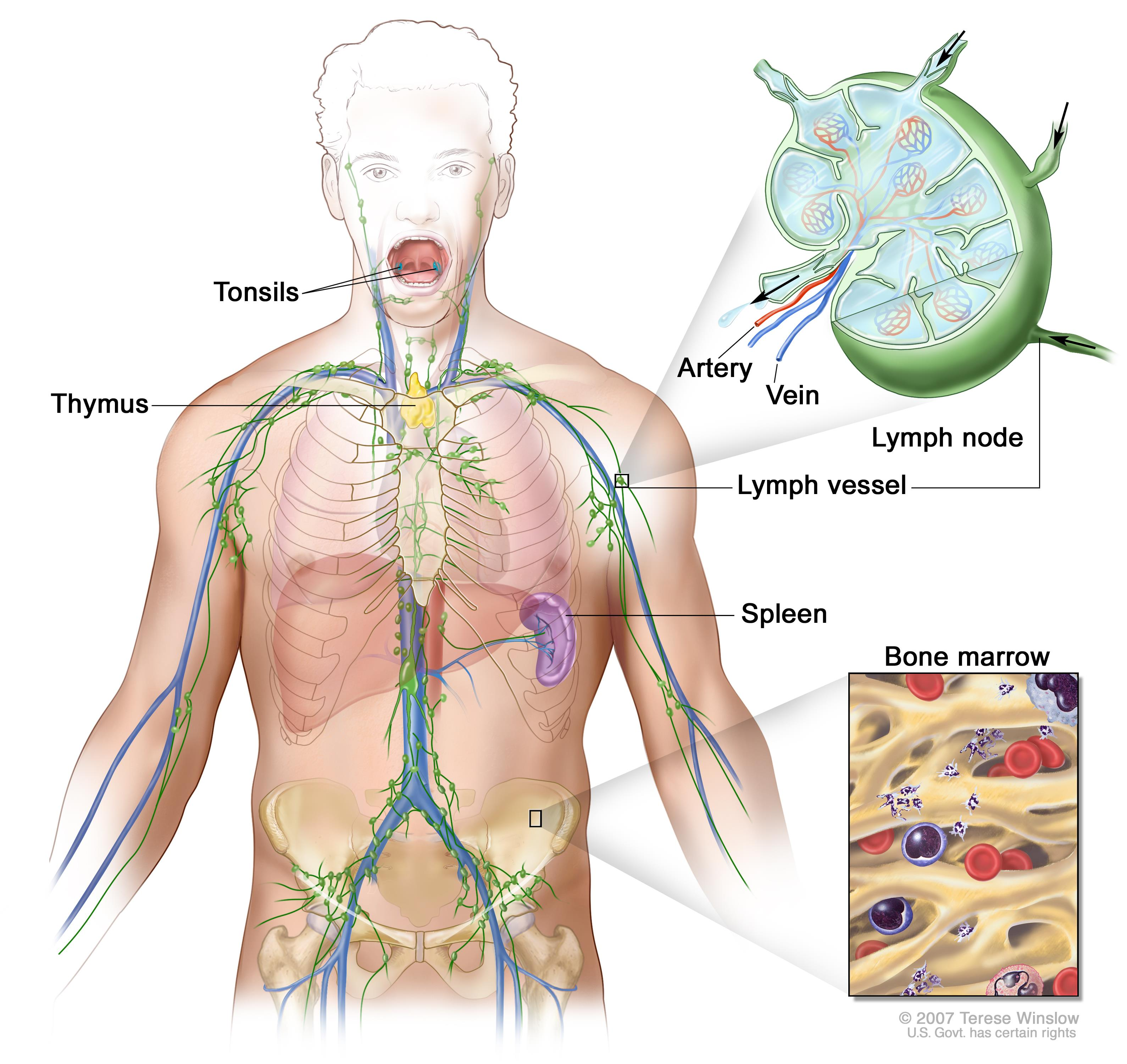 cancer research hodgkins lymphoma