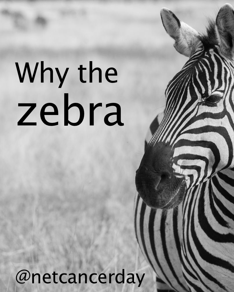 neuroendocrine cancer zebra
