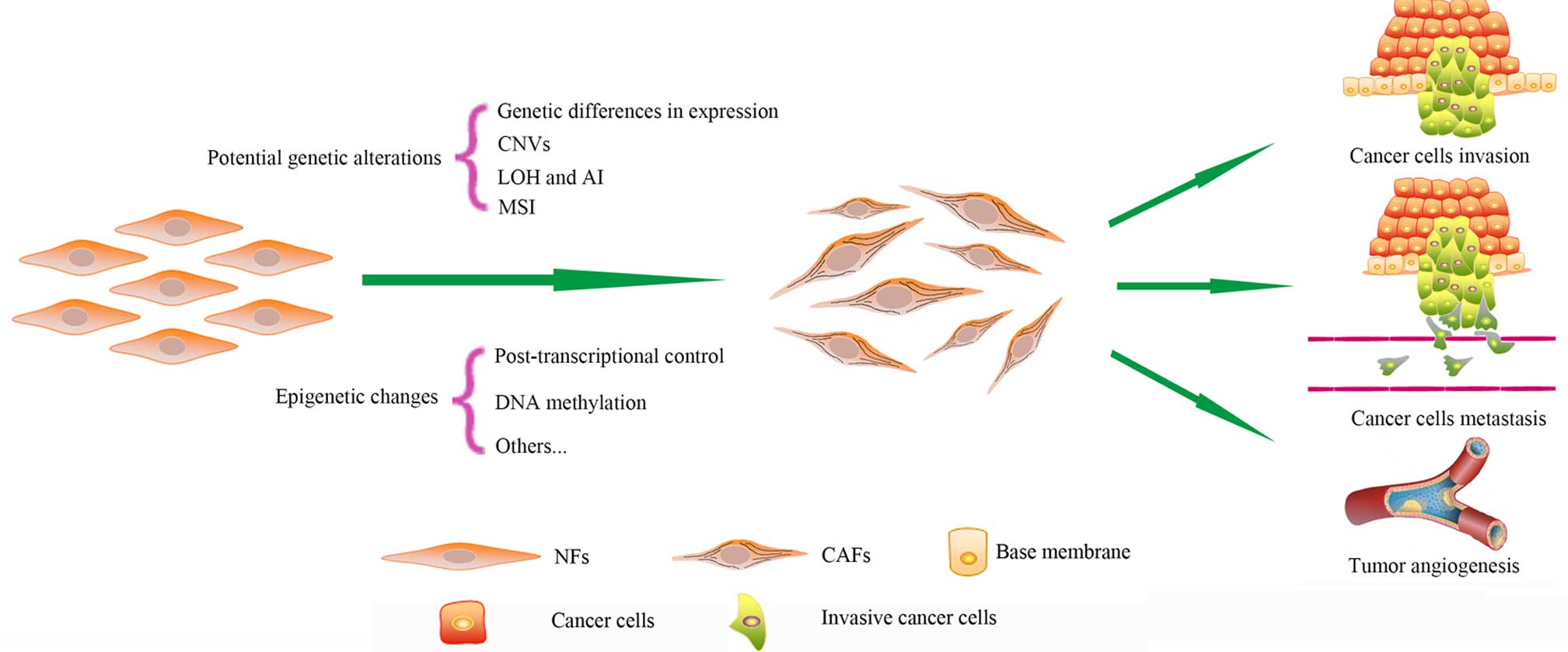 cancer cells genetic changes papillary urothelial carcinoma score