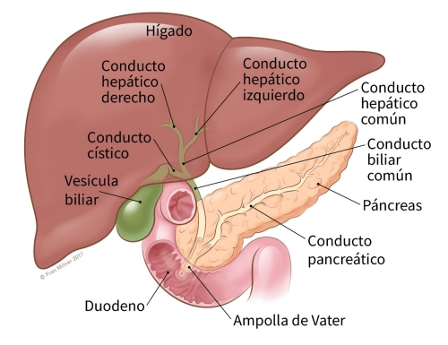 cancer de pancreas foro