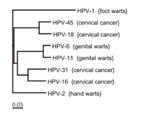 hpv cancer causing strains