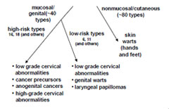 hpv causes what disease