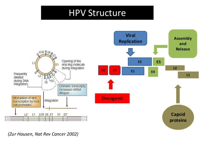 cancerul gastric ppt hpv scaly skin