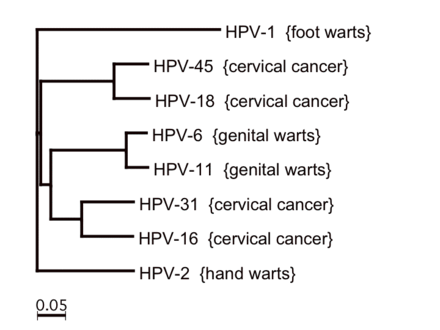 human papillomavirus infection vs genital warts renal cancer nivolumab