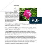 Curs de Colono-Hidroterapie - eBook by Maxim Dinculescu | XinXii - GD Publishing Ltd. & Co. KG