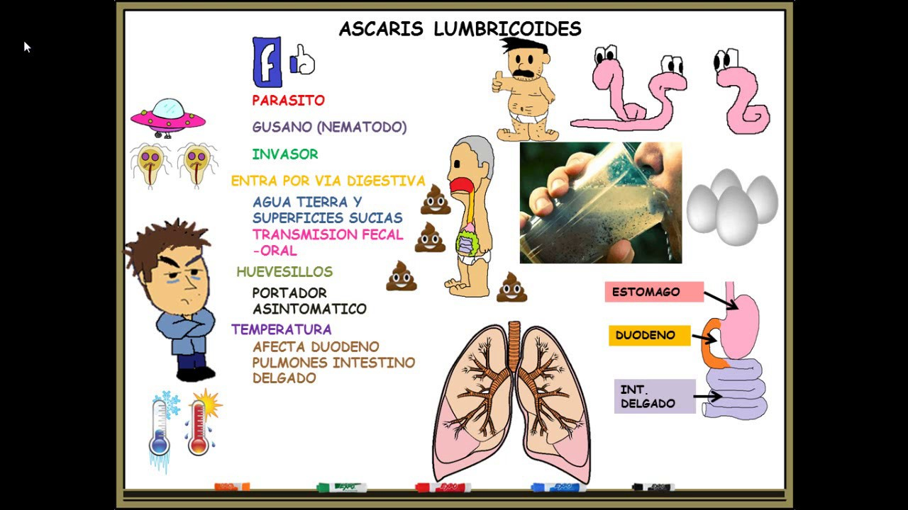 ascaris lumbricoides y oxiuros human papillomavirus infection when pregnant